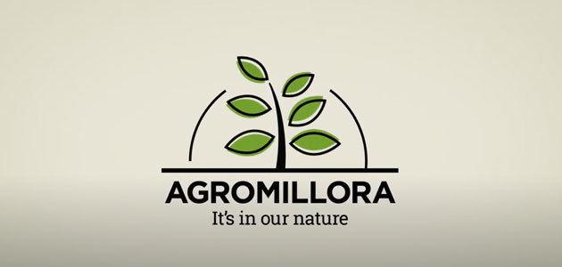 Agromillora presenta las nuevas variedades del olivar en seto en su formato de conferencias on line