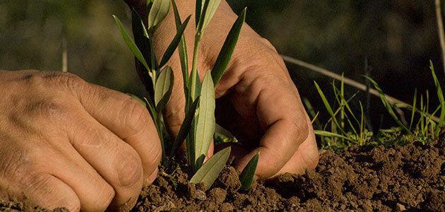 Hallan un método más eficaz para estimar las emisiones contaminantes de los fertilizantes nitrogenados