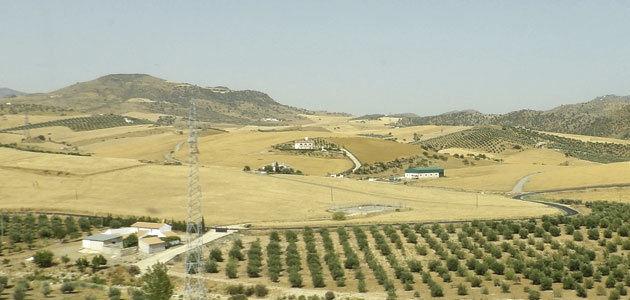 Nace Oleomontilla, una refineria de aceite de orujo de oliva en Córdoba