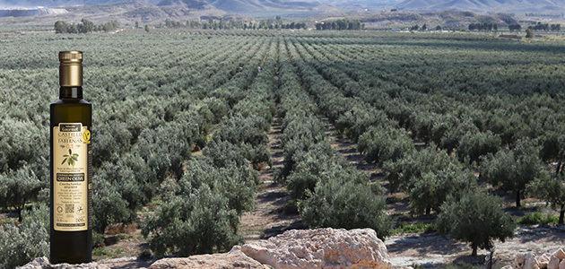 Crean una herramienta para mejorar la gestión del cultivo del olivar