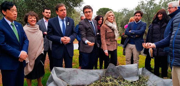 El director general de la FAO conoce el sector del olivar en una visita a Montoro (Córdoba)