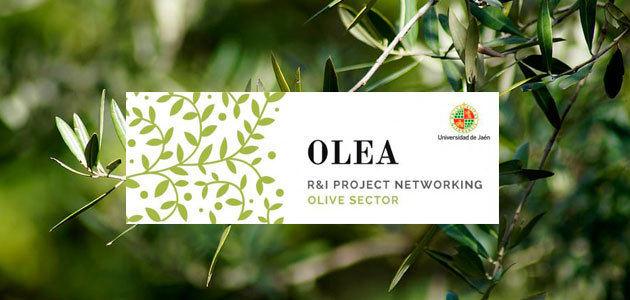 La UJA acogerá en mayo el III OLEA International Networking Event