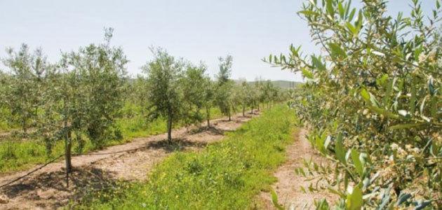 LIFE Agromitiga: combatir el cambio climático con agricultura de conservación