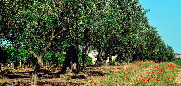 Bosch Smart Irrigation, un sistema para la monitorización del estado hídrico del olivo