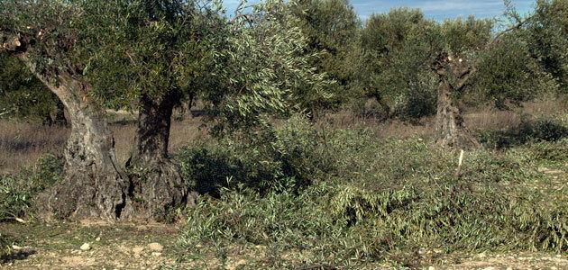 Biomateriales más sostenibles a partir de residuos de la poda del olivar