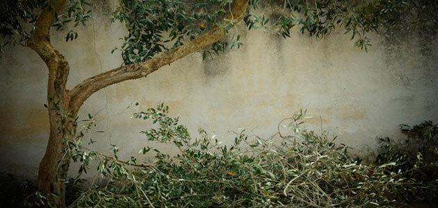 Un proyecto piloto para el tratamiento de los residuos de las aceitunas en las plantas de purines de Castellón